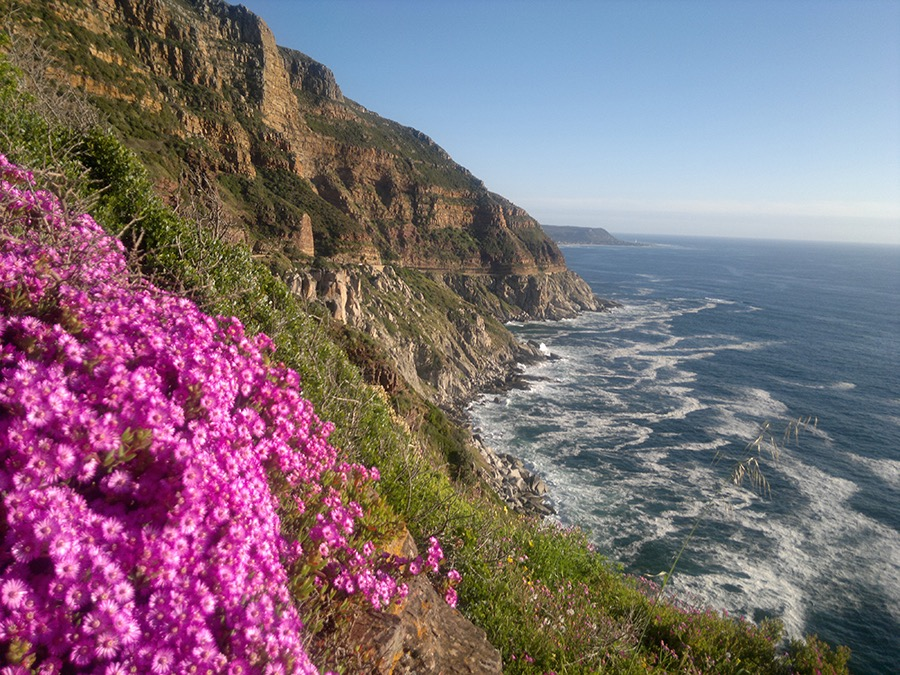 Chapmans Peak Cape Town Tours