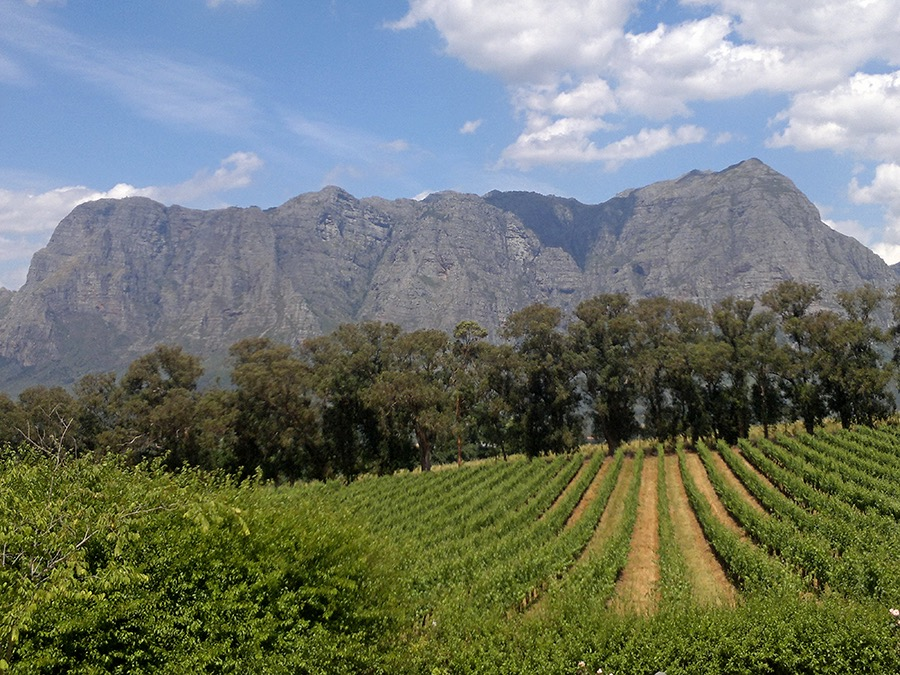 Cape winelands Wine Tour